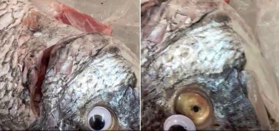 Így trükköztek, hogy frissebbnek tűnjön a hal