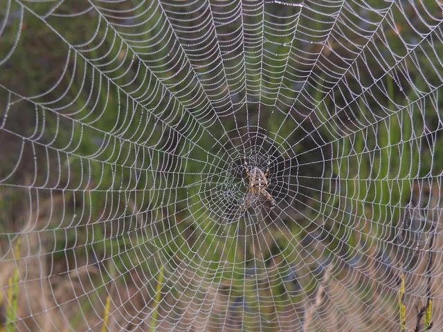 Hihetelen mit ki nem talál az ember! Szerinted mire használhatnánk a pókhálót?